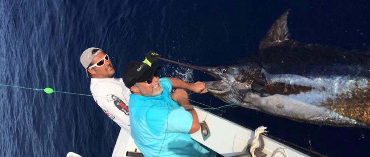 Huge blue marlin fishing 800 lbs from Olhao - Portugal
