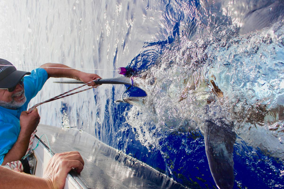 blue marlin big game fishing