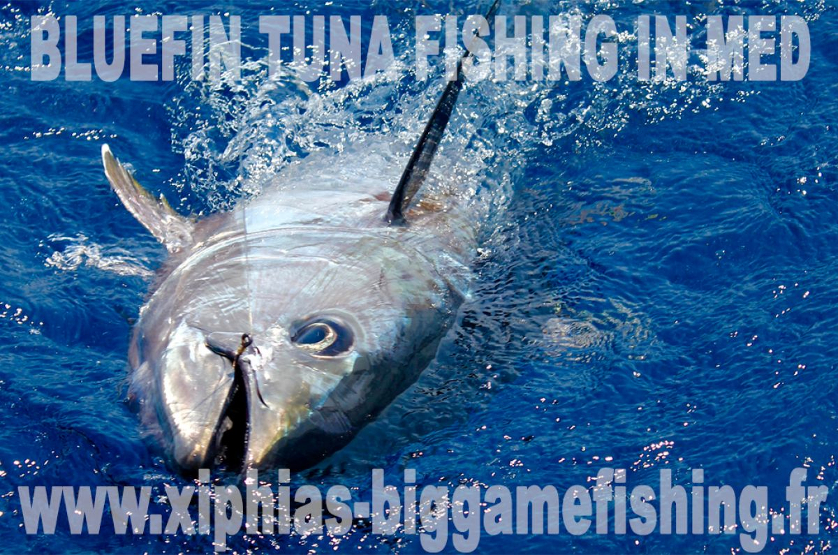 Bluefin tuna fishing in Med