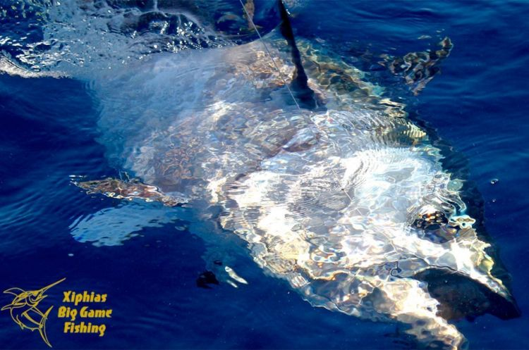 Bluefin tuna fishing in Algarve