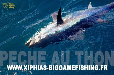 Video - Bluefin tuna fishing with XBGF in France