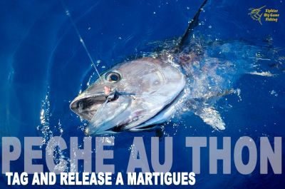 Bluefin Tuna Fishing Tag and release Martigues South of France