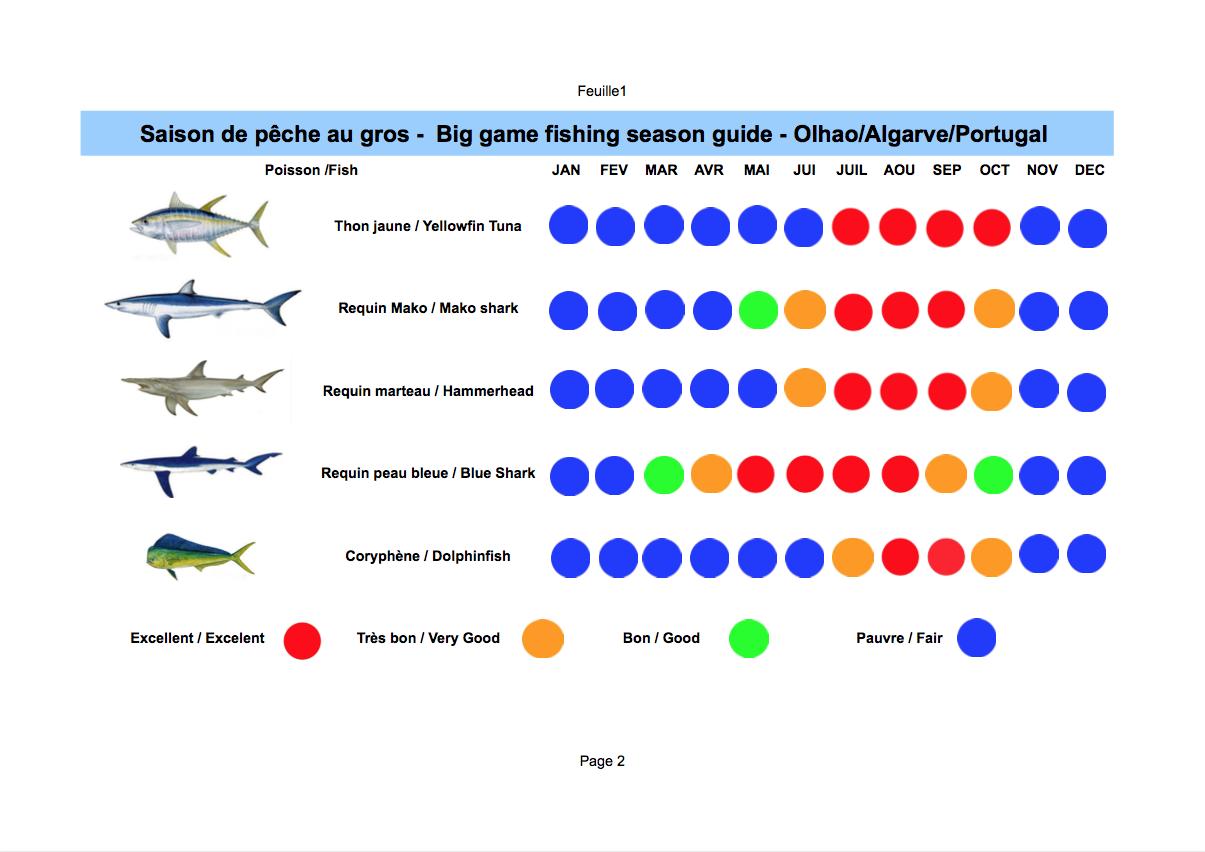 Guide de la saison de pêche au gros à Olhao en Algarve