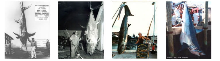 Big game fishing records
