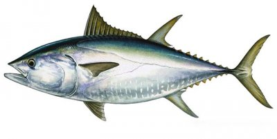 bluefin tuna fishing algarve