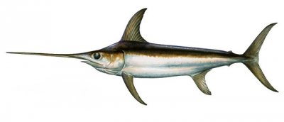 swordfishing algarve